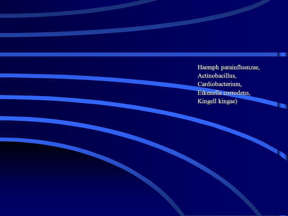 Haemph parainfluenzae, Actinobacillus, Cardiobacterium, Eikenella corrodens, Kingell kingae)