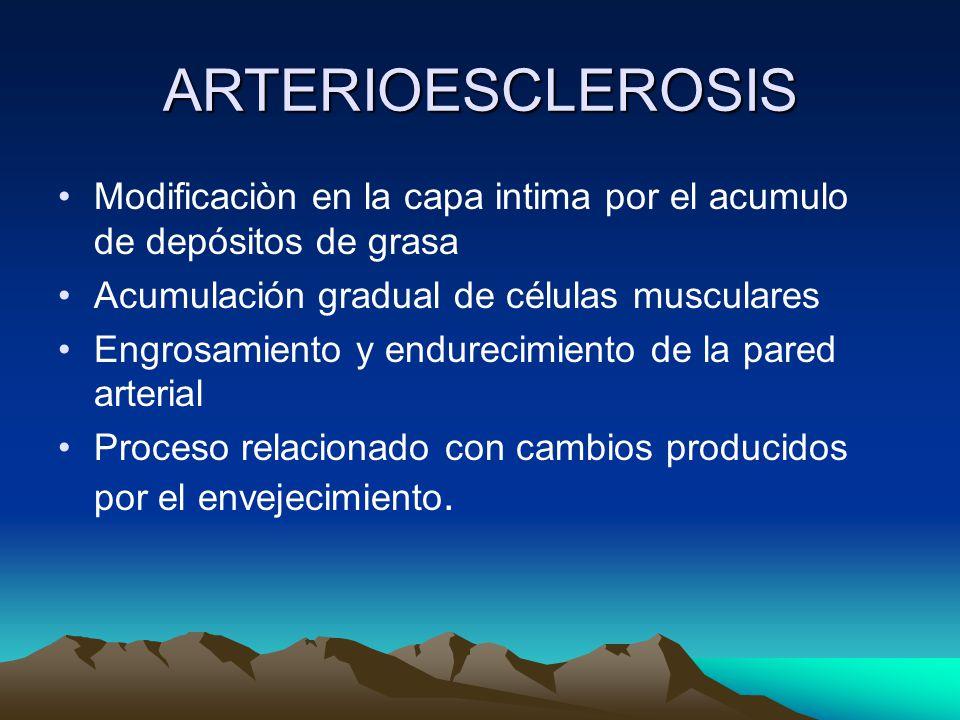 ARTERIOESCLEROSIS Modificaciòn en la capa intima por el acumulo de depósitos de grasa. Acumulación gradual de células musculares.