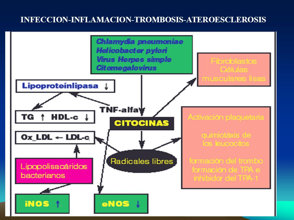 INFECCION-INFLAMACION-TROMBOSIS-ATEROESCLEROSIS