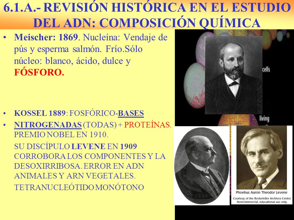 6.1.A.- REVISIÓN HISTÓRICA EN EL ESTUDIO DEL ADN: COMPOSICIÓN QUÍMICA