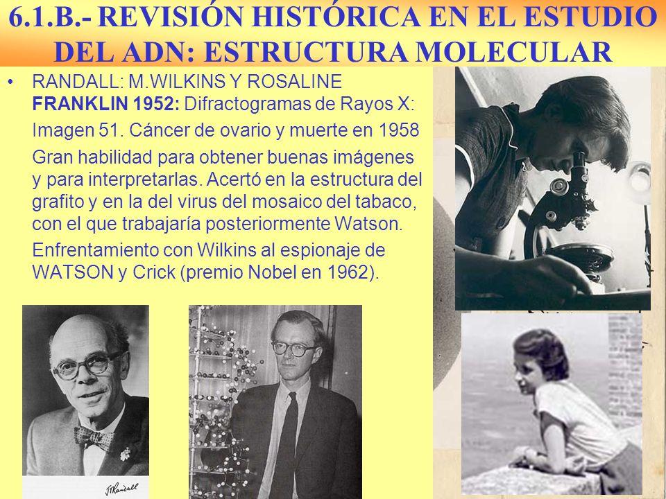 6.1.B.- REVISIÓN HISTÓRICA EN EL ESTUDIO DEL ADN: ESTRUCTURA MOLECULAR