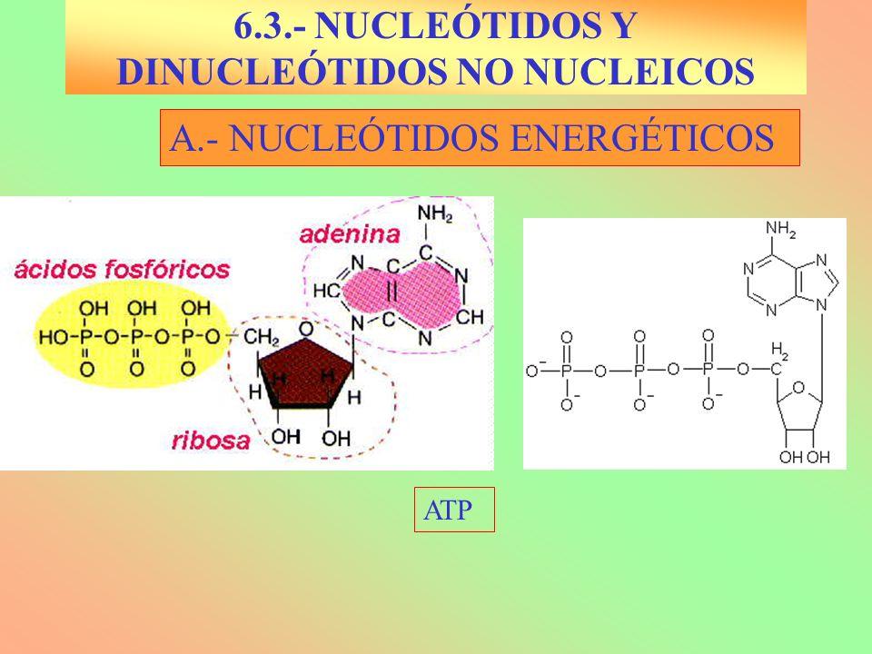 6.3.- NUCLEÓTIDOS Y DINUCLEÓTIDOS NO NUCLEICOS
