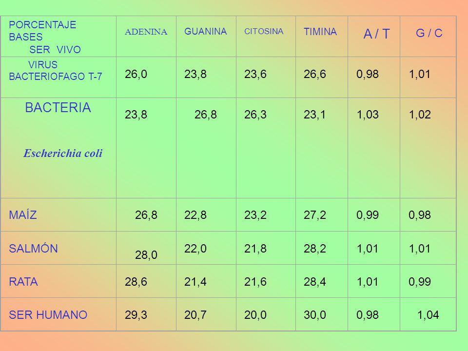 BACTERIA 26,0 23,8 23,6 26,6 0,98 1,01 Escherichia coli 26,8 26,3 23,1