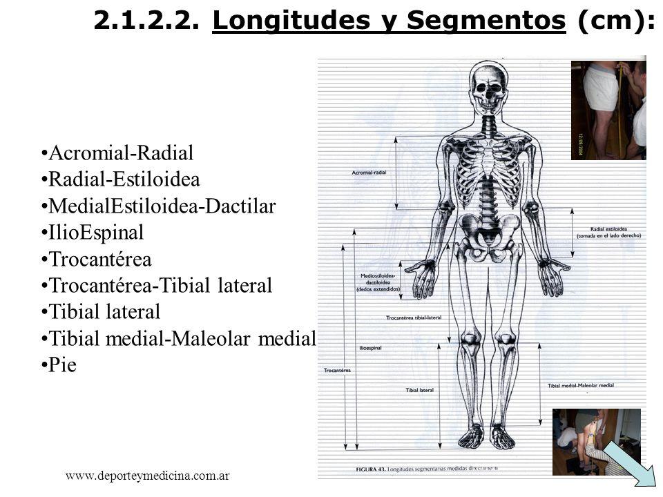 2.1.2.2. Longitudes y Segmentos (cm):