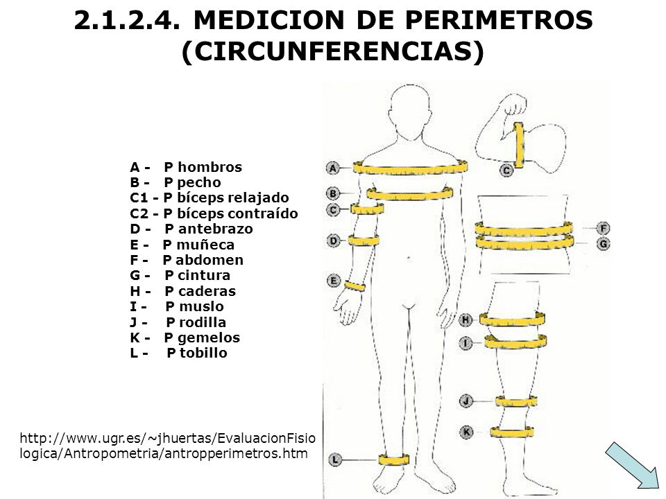 2.1.2.4. MEDICION DE PERIMETROS (CIRCUNFERENCIAS)