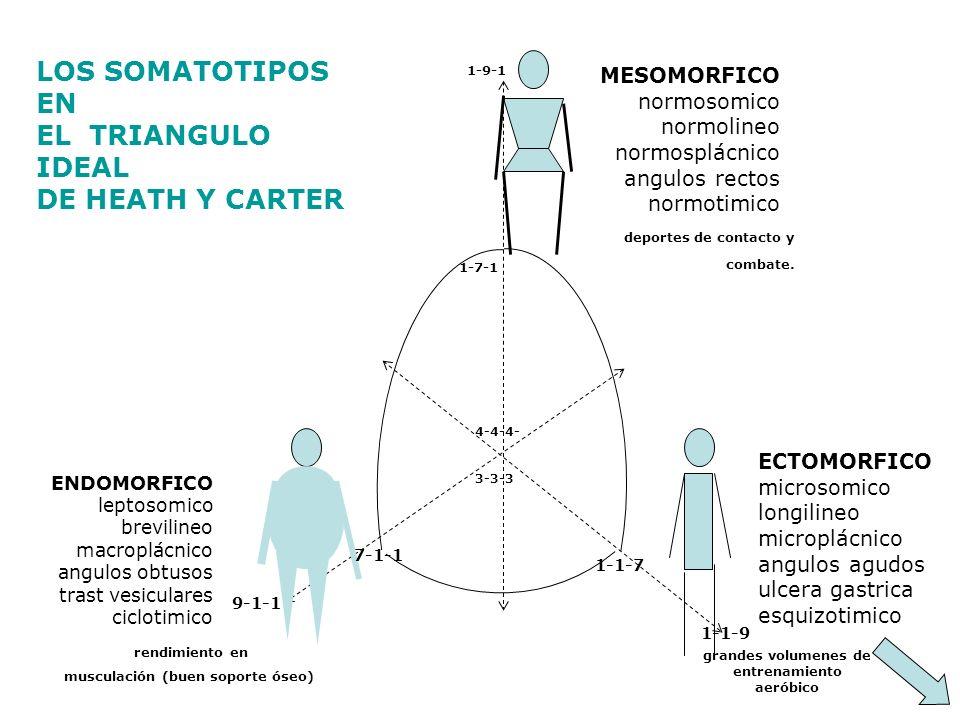LOS SOMATOTIPOS EN EL TRIANGULO IDEAL DE HEATH Y CARTER