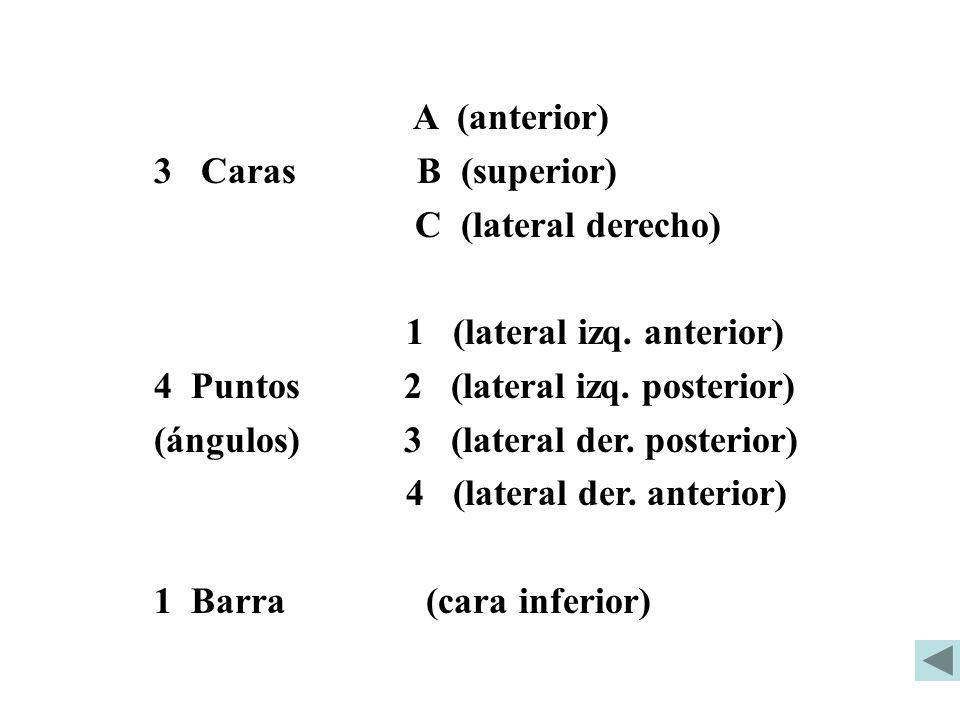 A (anterior) 3 Caras B (superior) C (lateral derecho) 1 (lateral izq. anterior)