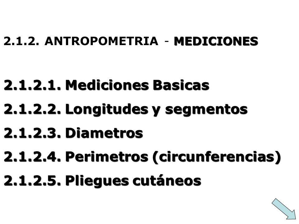 2.1.2.2. Longitudes y segmentos 2.1.2.3. Diametros