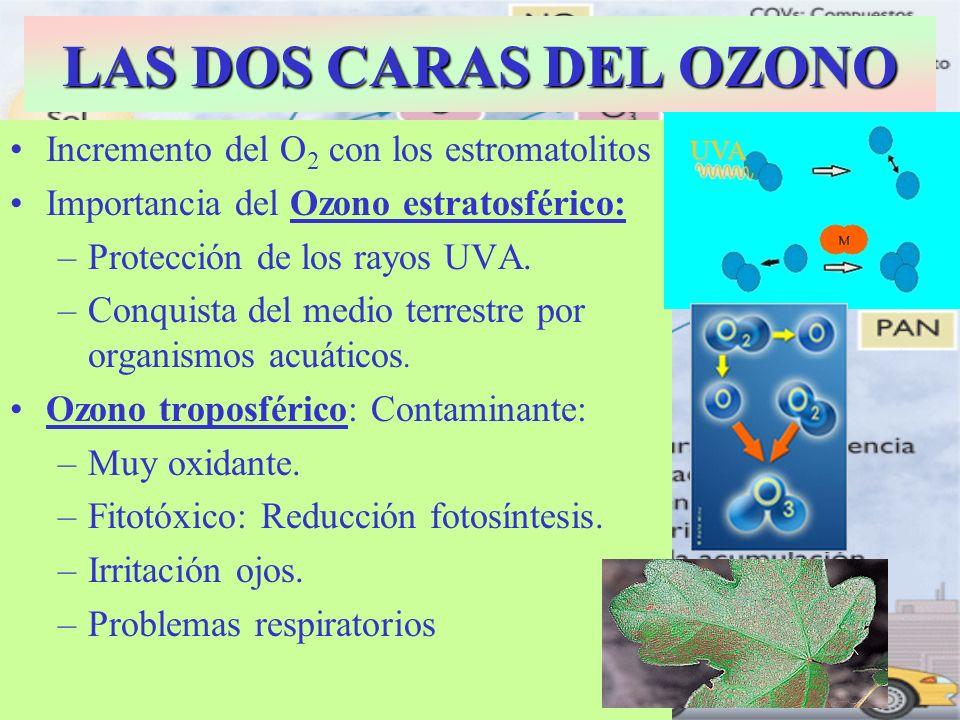 LAS DOS CARAS DEL OZONO Incremento del O2 con los estromatolitos