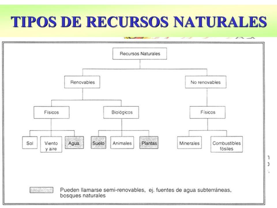 TIPOS DE RECURSOS NATURALES
