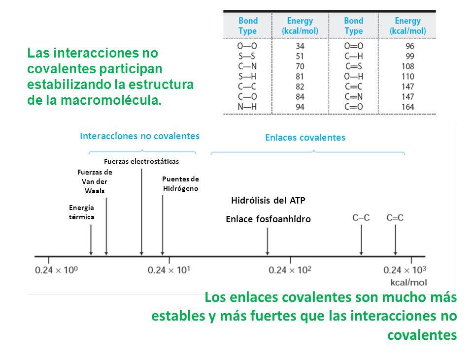 Las interacciones no covalentes participan estabilizando la estructura de la macromolécula.