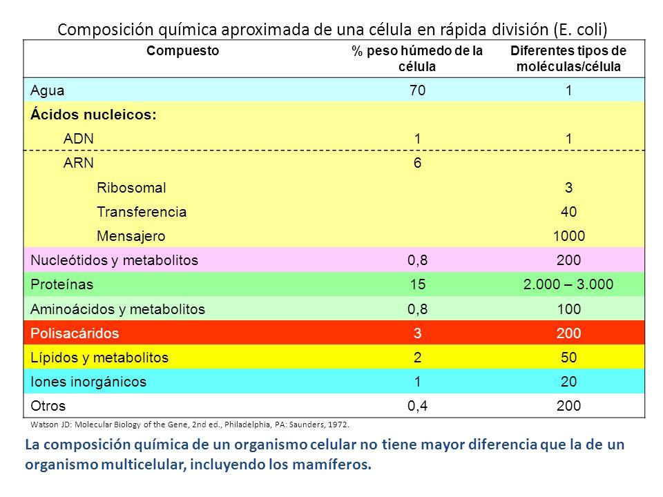 % peso húmedo de la célula Diferentes tipos de moléculas/célula