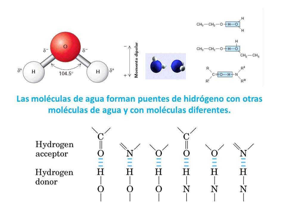 Momento dipolar Las moléculas de agua forman puentes de hidrógeno con otras moléculas de agua y con moléculas diferentes.
