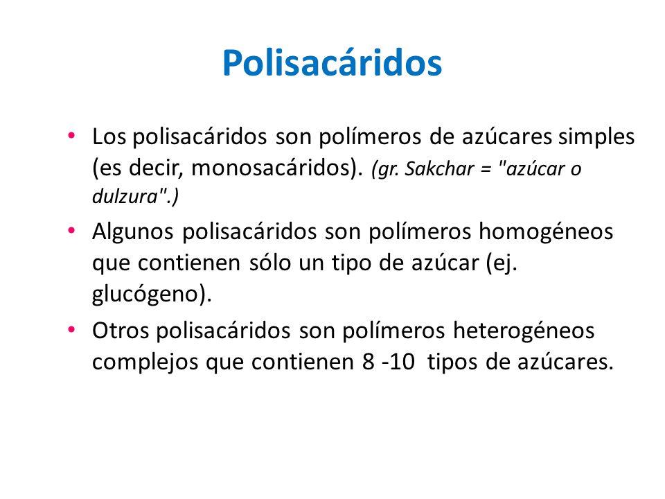 Polisacáridos Los polisacáridos son polímeros de azúcares simples (es decir, monosacáridos). (gr. Sakchar = azúcar o dulzura .)