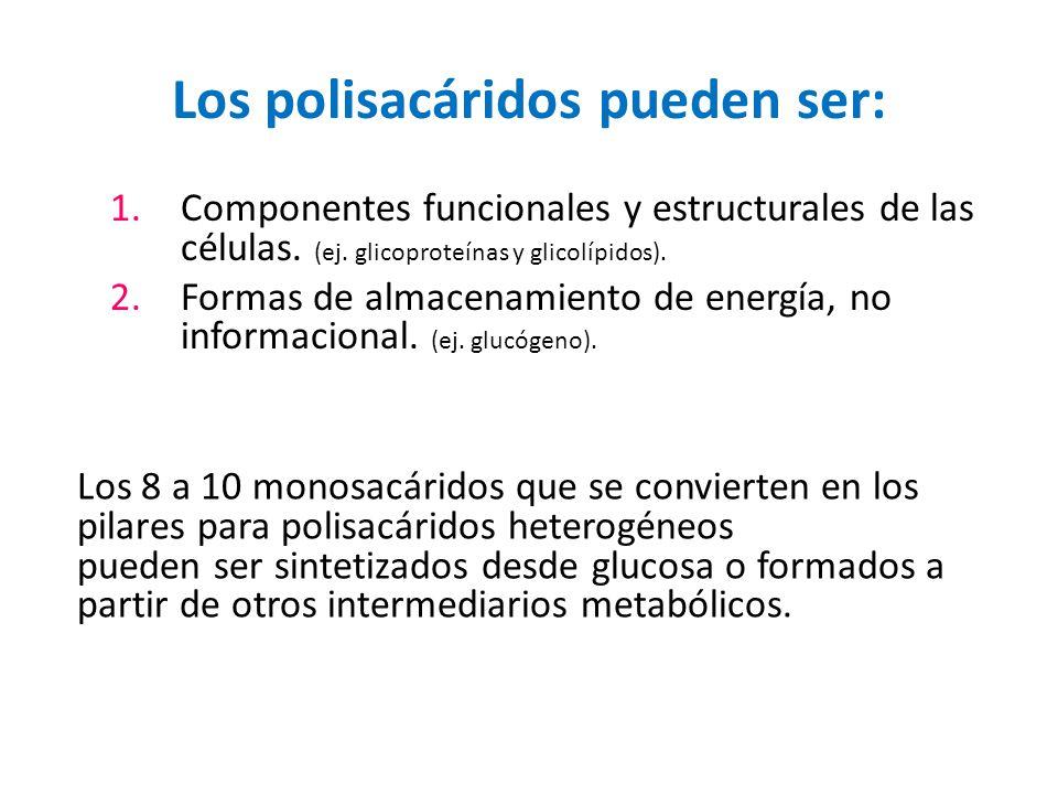 Los polisacáridos pueden ser: