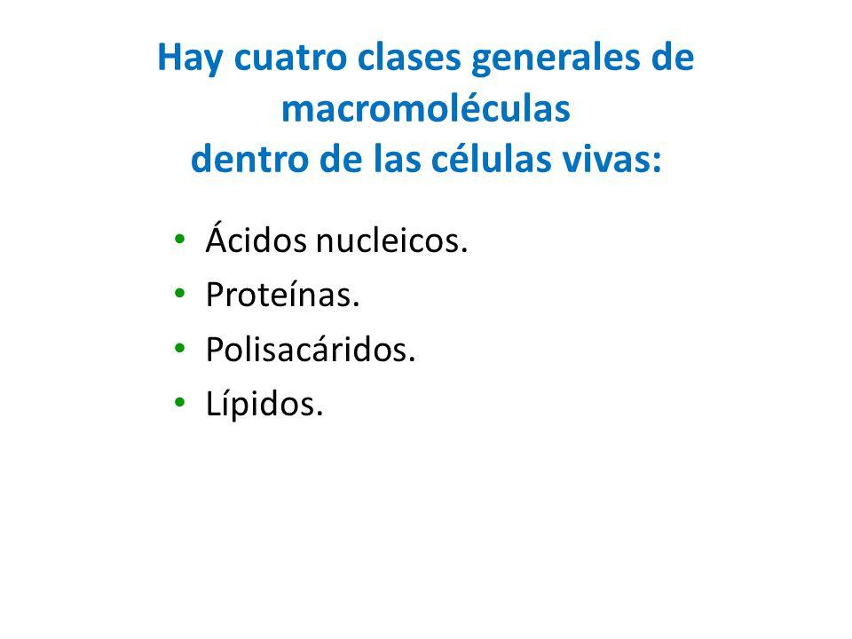 Hay cuatro clases generales de macromoléculas dentro de las células vivas:
