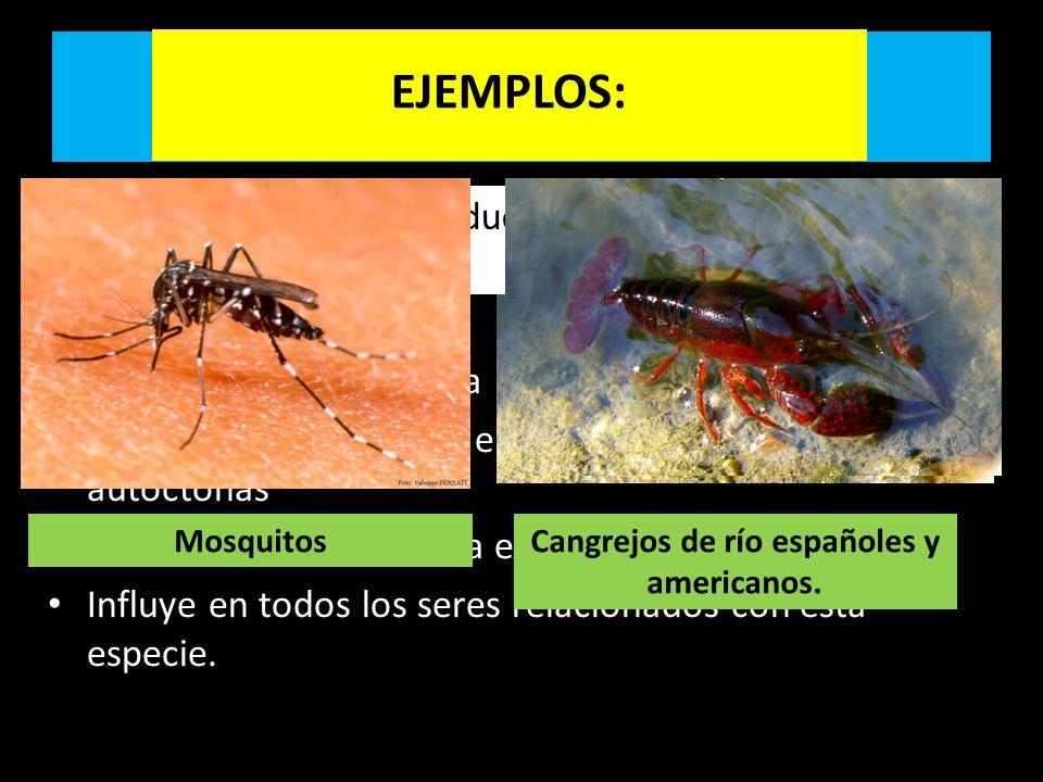 INTRODUCCIÓN DE ESPECIES EXÓTICAS