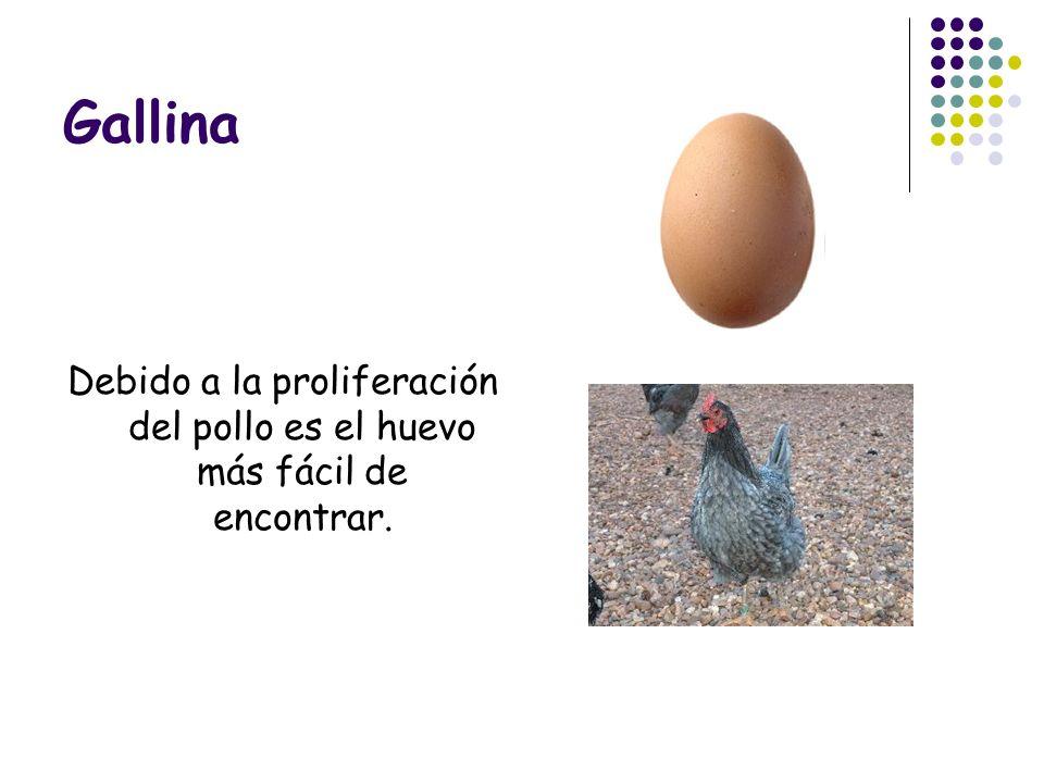 Gallina Debido a la proliferación del pollo es el huevo más fácil de encontrar.