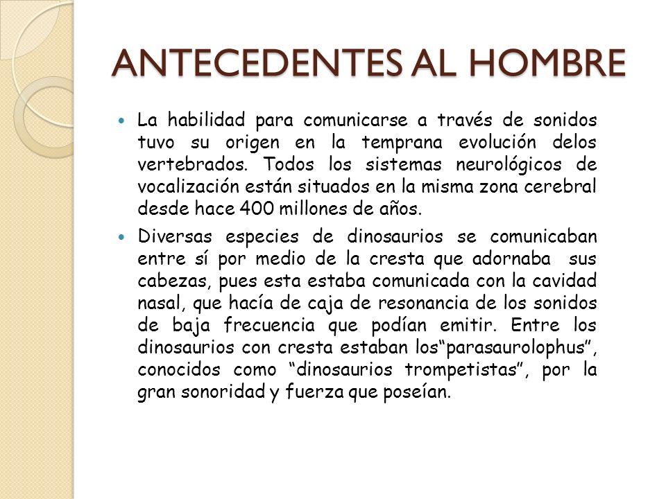 ANTECEDENTES AL HOMBRE
