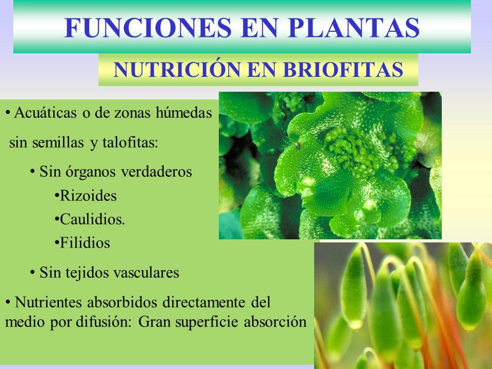 NUTRICIÓN EN BRIOFITAS