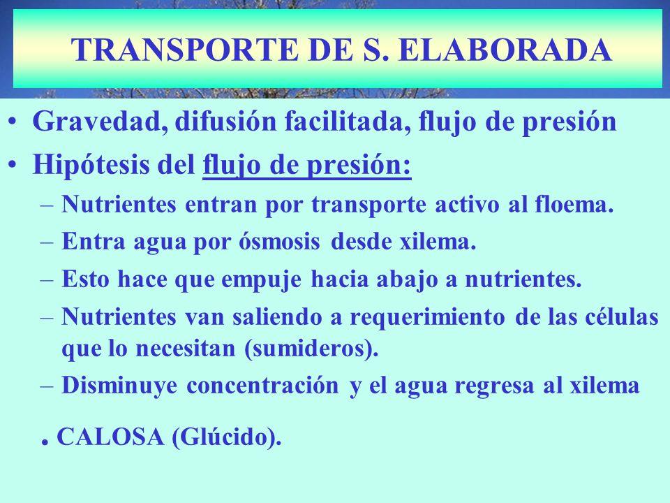 TRANSPORTE DE S. ELABORADA