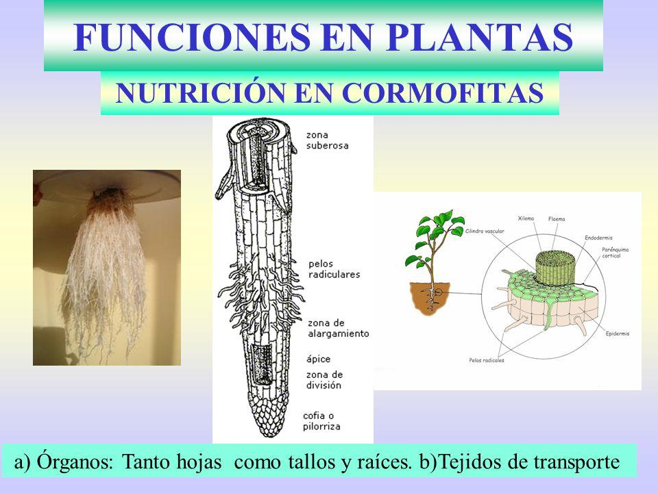 NUTRICIÓN EN CORMOFITAS