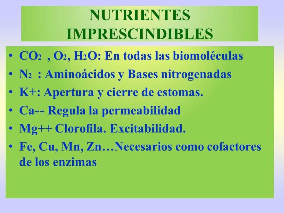 NUTRIENTES IMPRESCINDIBLES