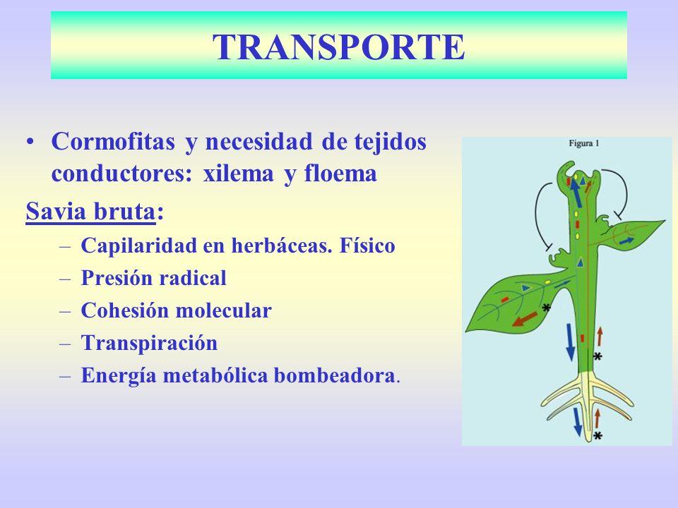 TRANSPORTE Cormofitas y necesidad de tejidos conductores: xilema y floema. Savia bruta: Capilaridad en herbáceas. Físico.