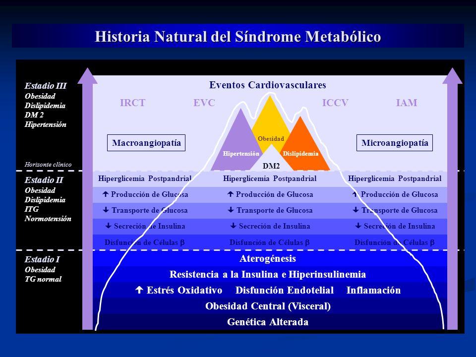 Historia Natural del Síndrome Metabólico