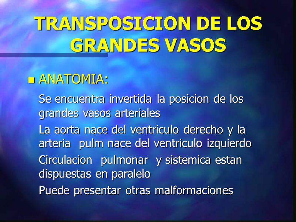 TRANSPOSICION DE LOS GRANDES VASOS