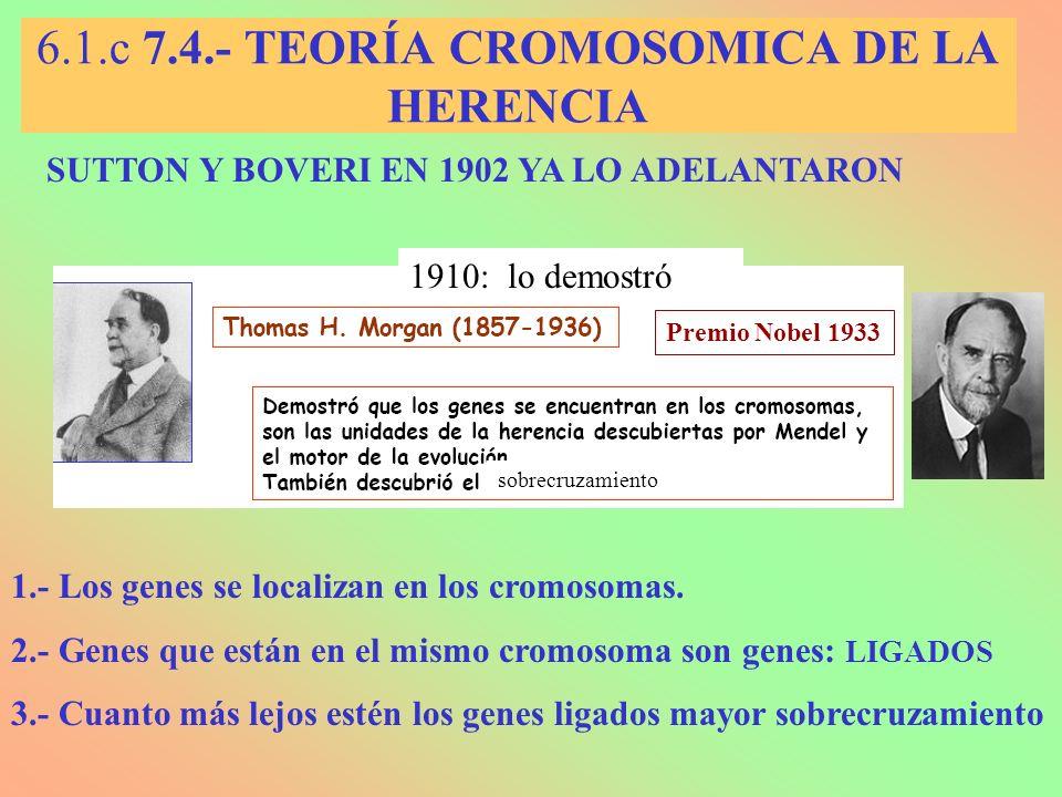 6.1.c 7.4.- TEORÍA CROMOSOMICA DE LA HERENCIA