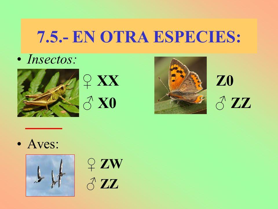7.5.- EN OTRA ESPECIES: Insectos: ♀ XX ♀ Z0 ♂ X0 ♂ ZZ Aves: ♀ ZW ♂ ZZ