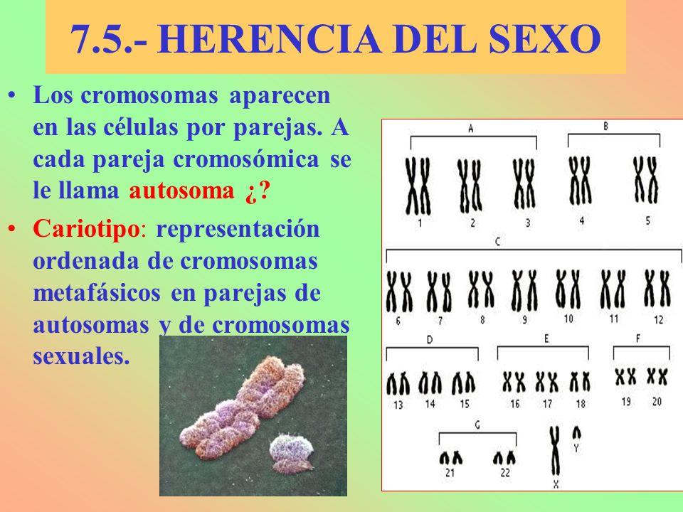 7.5.- HERENCIA DEL SEXO Los cromosomas aparecen en las células por parejas. A cada pareja cromosómica se le llama autosoma ¿