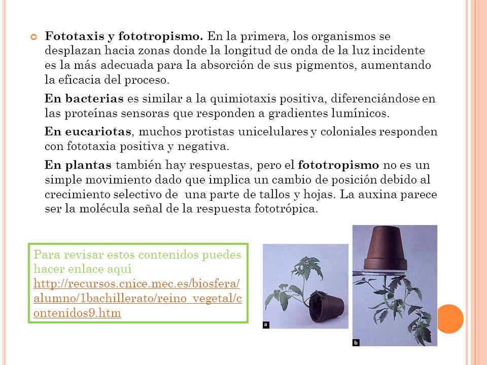 Fototaxis y fototropismo