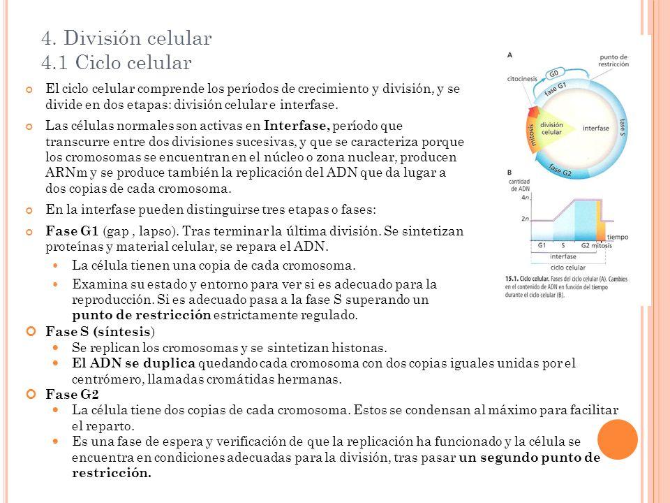 4. División celular 4.1 Ciclo celular