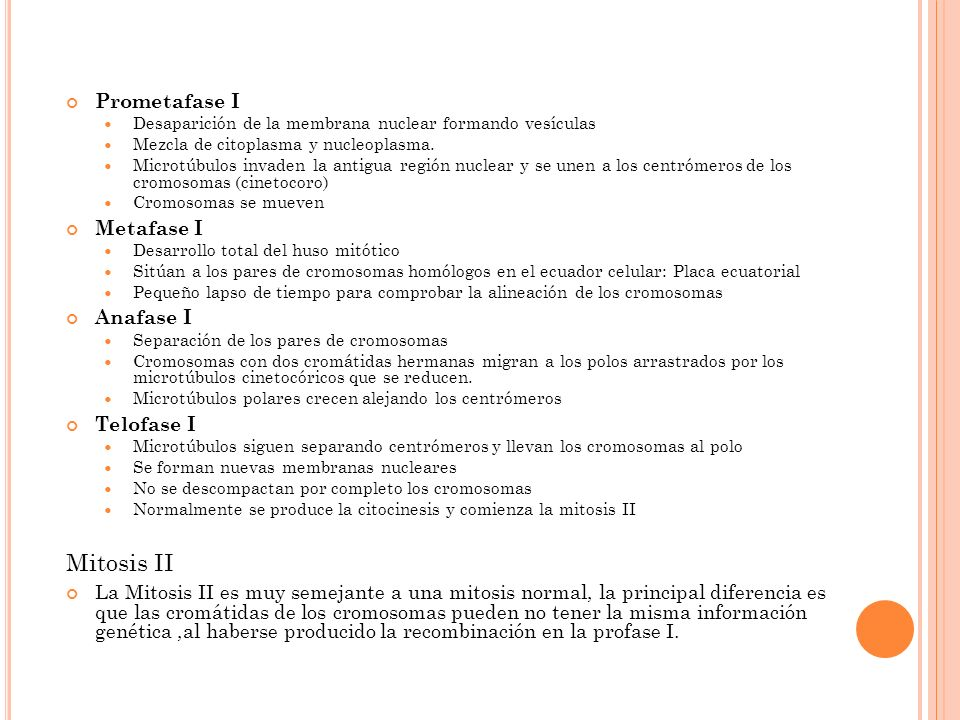 Mitosis II Prometafase I Metafase I Anafase I Telofase I