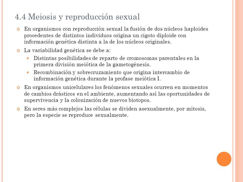 4.4 Meiosis y reproducción sexual