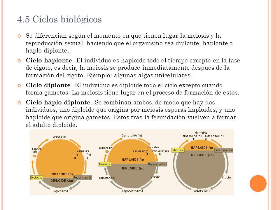 4.5 Ciclos biológicos
