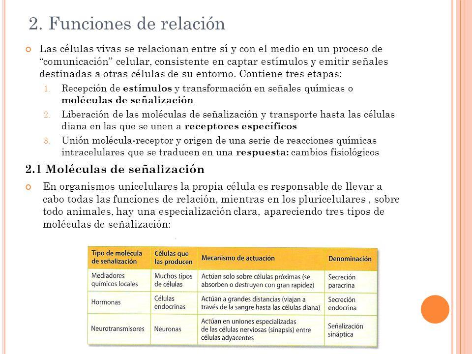 2. Funciones de relación 2.1 Moléculas de señalización