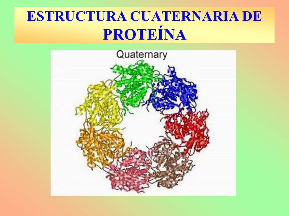 ESTRUCTURA CUATERNARIA DE PROTEÍNA