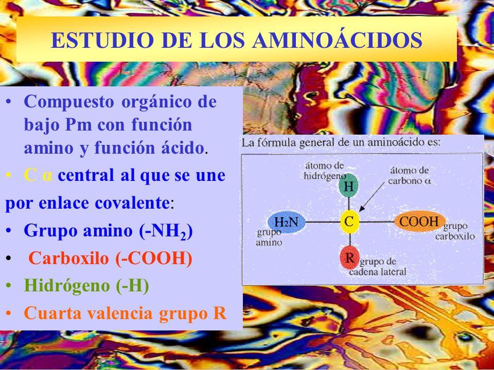 ESTUDIO DE LOS AMINOÁCIDOS