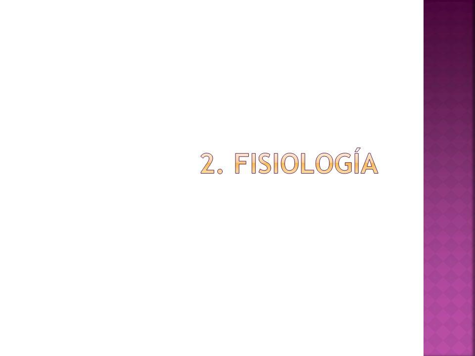 2. fisiología