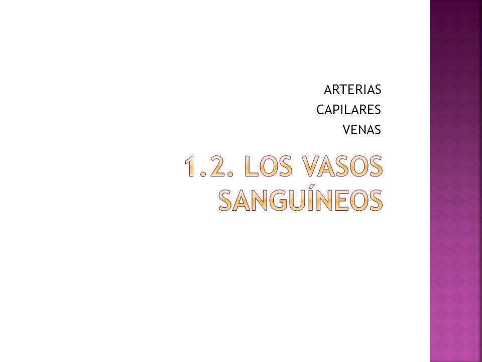 ARTERIAS CAPILARES VENAS 1.2. los vasos sanguíneos