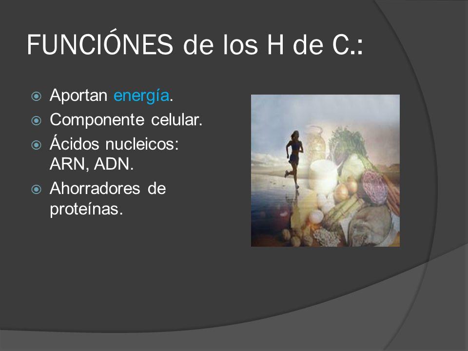 FUNCIÓNES de los H de C.: Aportan energía. Componente celular.