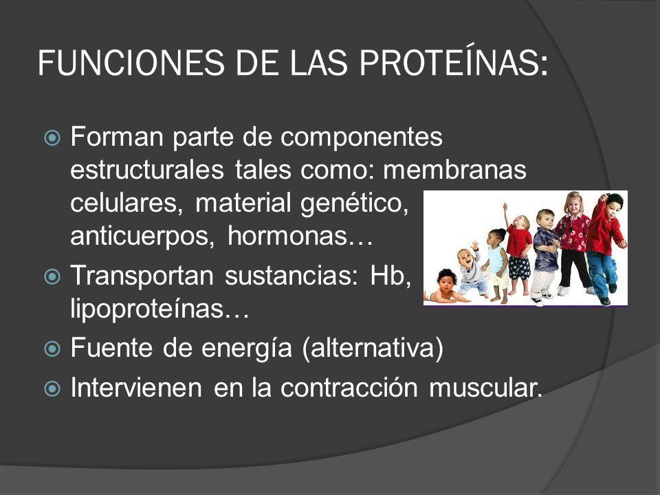 FUNCIONES DE LAS PROTEÍNAS: