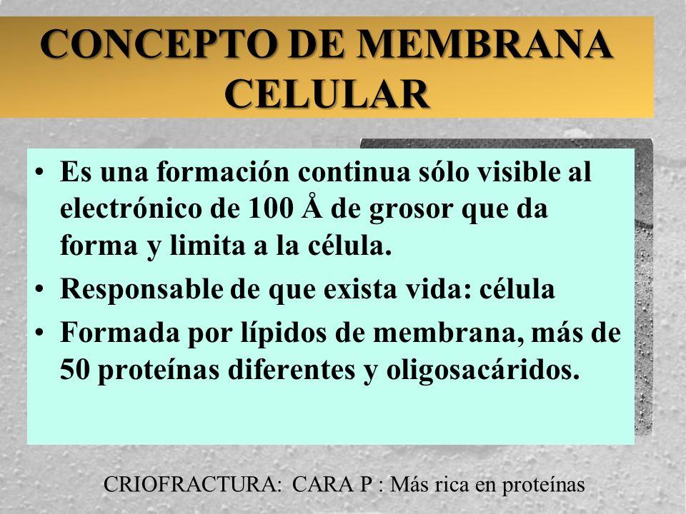 CONCEPTO DE MEMBRANA CELULAR
