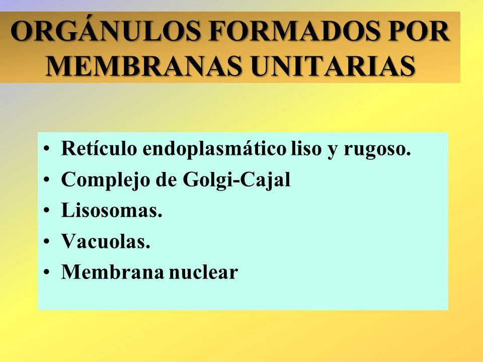 ORGÁNULOS FORMADOS POR MEMBRANAS UNITARIAS