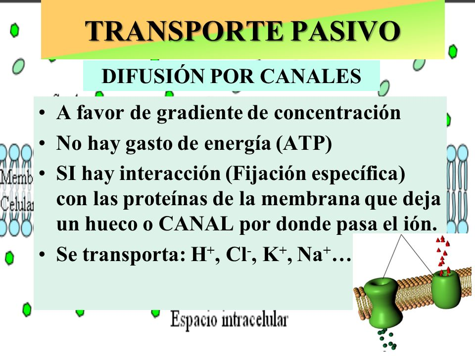 TRANSPORTE PASIVO DIFUSIÓN POR CANALES