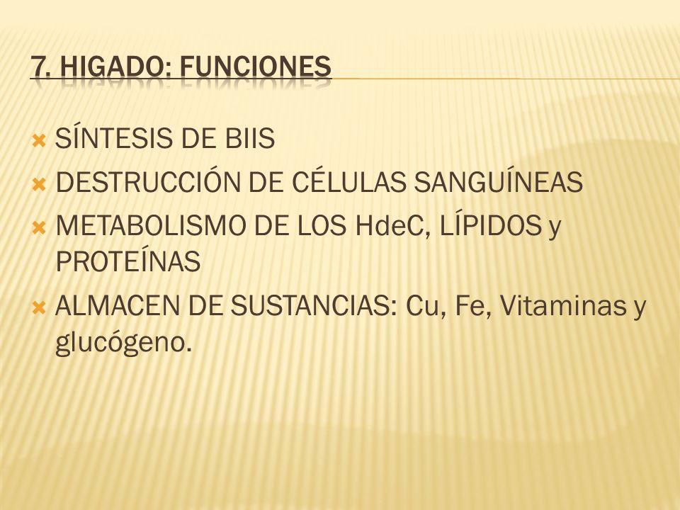 7. HIGADO: FUNCIONES SÍNTESIS DE BIIS. DESTRUCCIÓN DE CÉLULAS SANGUÍNEAS. METABOLISMO DE LOS HdeC, LÍPIDOS y PROTEÍNAS.