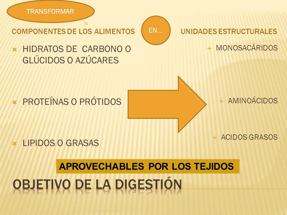 Objetivo de la digestión